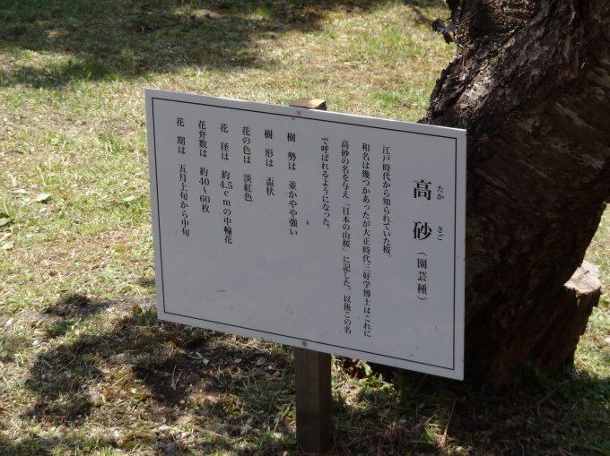 石崎地主海神社_12
